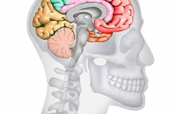 Endoskopik Şakak Germe Nedir? 1